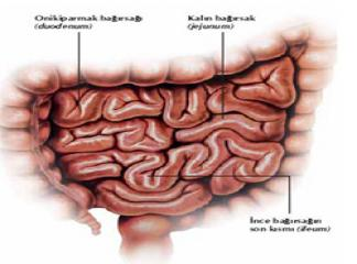 ince barsak hastalıkları